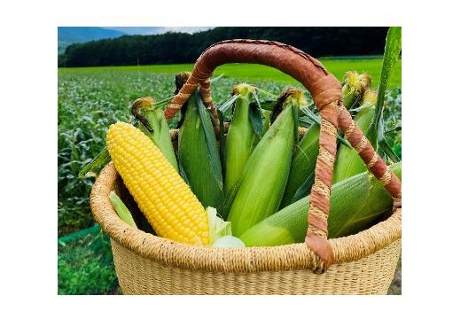 サステナブルな野菜を使ったスープを提供